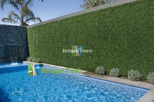 Swimming Pool Box Hedge