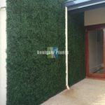 Boxwood hedge