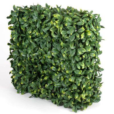 Portable laurel leaf hedge for events (1)