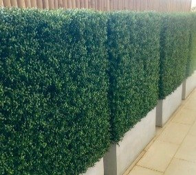 portable potted hedges
