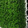 Buxus Hedge Side