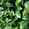 Fake Gardenia Hedge Panel