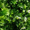 Artificial Plant - White Oasis Vertical Garden / Green Wall UV Resistant closeup