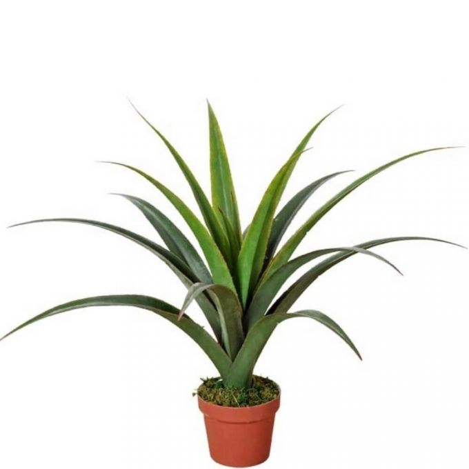 Fake Dracaena Plants 80cm (1)