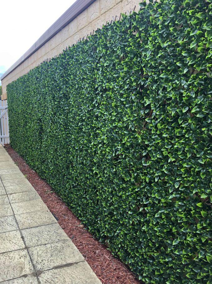 Laurel Hedge Extendable Trellis / Screen 2 Meter by 1 Meter UV Resistant (Extra Dense)