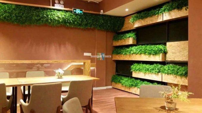 Med Fern in planter boxes for a cafe