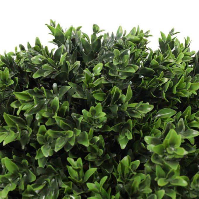leaves of topiary shrub plant