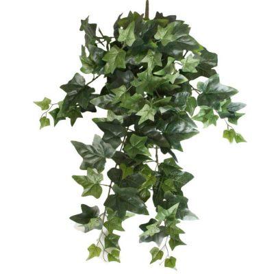 Mixed Ivy Hanging Bush