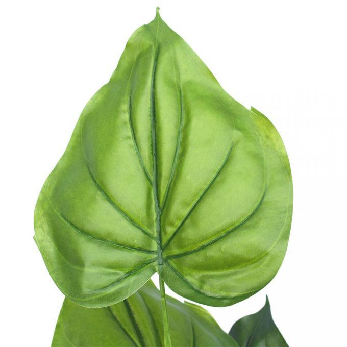 Taro Plant - Leaf