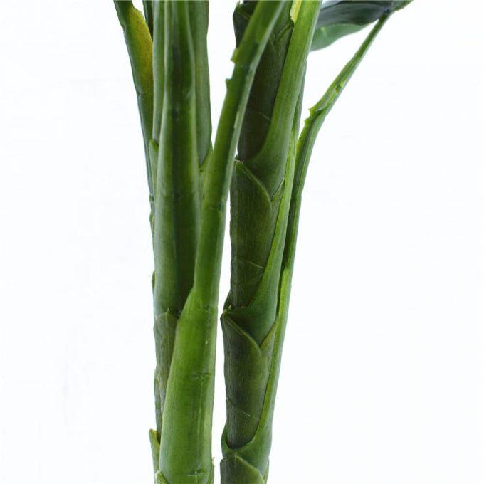 Taro Plant - Stem