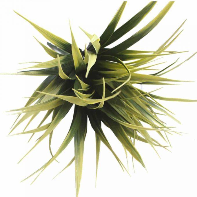 Yellow Tipped Grass Stem