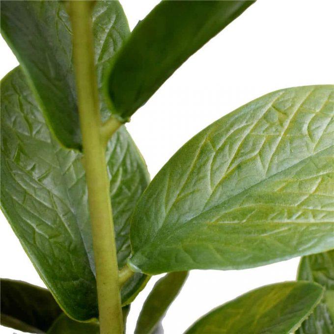 Artificial Zanzibar leaf close up