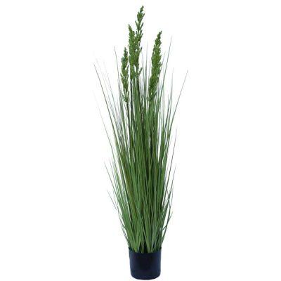 Flowering Native Grass