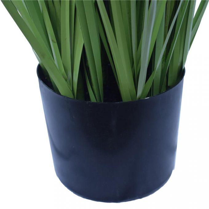 Flowering Native Grass -Pot