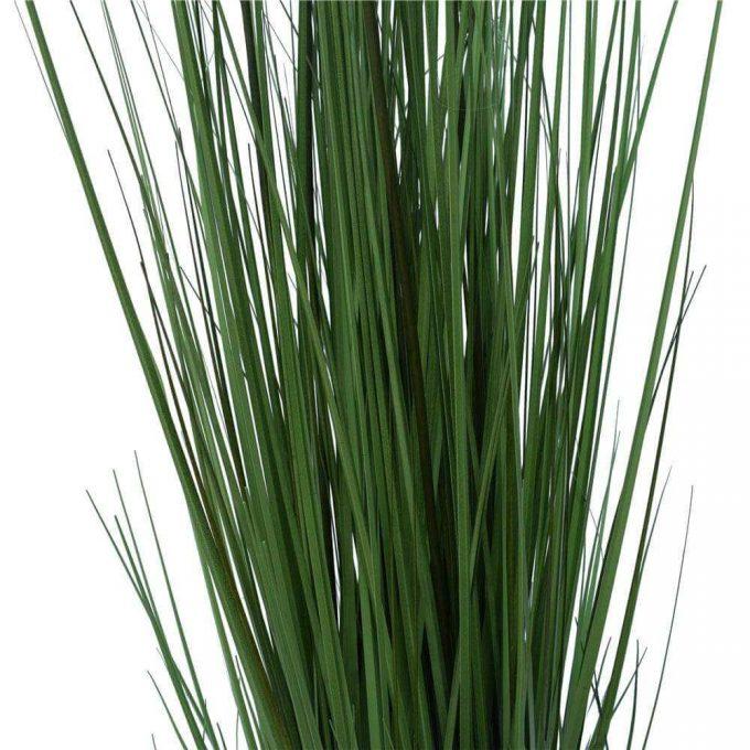 Flowering Native Grass - Details