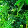 mixed green wall