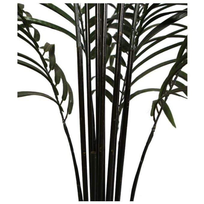 Black Palm Trunk Details