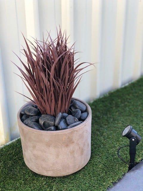 Ornamental Potted Dense Burgundy Grass
