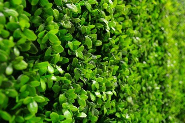 Artificial Plants - Deluxe Buxus Hedge Panels UV Resistant 1m x 1m