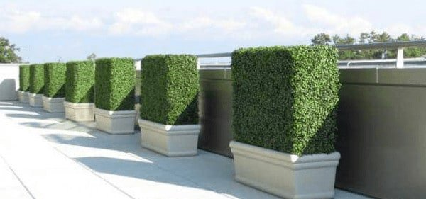 Your guide to boxwood hedges - boxed hedges in the home