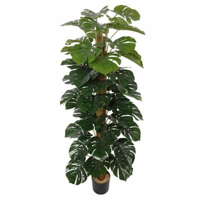 Artificial Money Plant (Monstera)