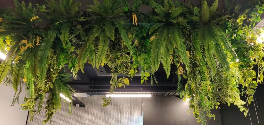 hanging plants in a cafe