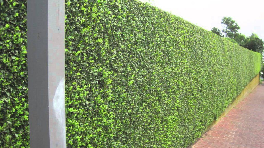 Spring Sensation Green Wall