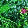 flowering purple pink artificial jasmine stem