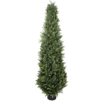 Cypress, Pines & Tall Grasses