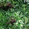 artificial vertical garden panel with brown grasses