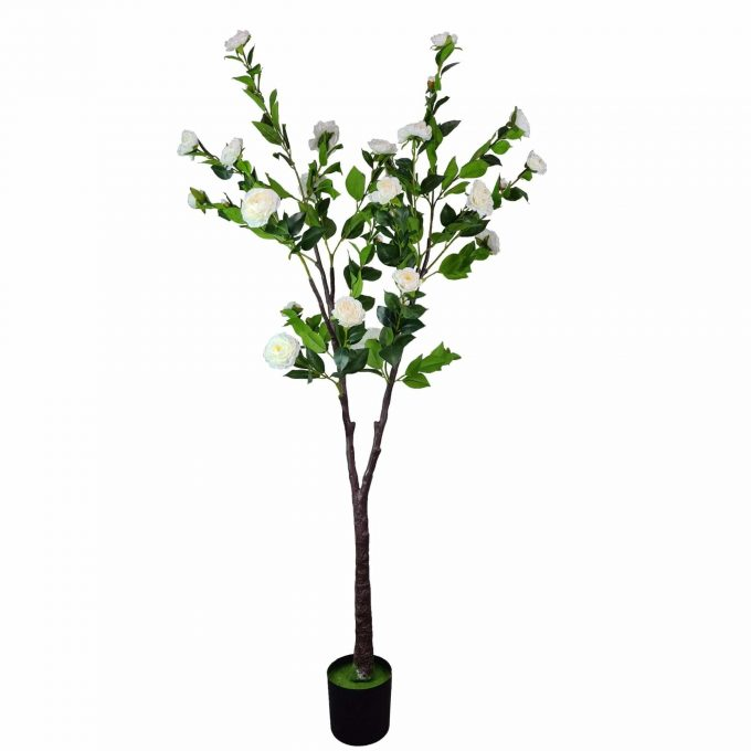 white tall camellia tree with white flowers