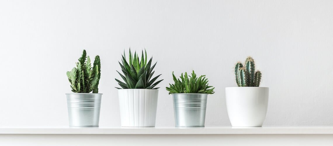 Pots come in different materials. Learn more from Designer Plants so you can choose the right one for you!