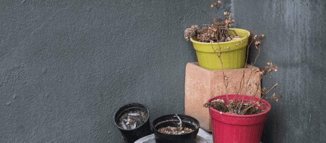 Gift ideas for those who kill plants - no green thumb plants dead in corner