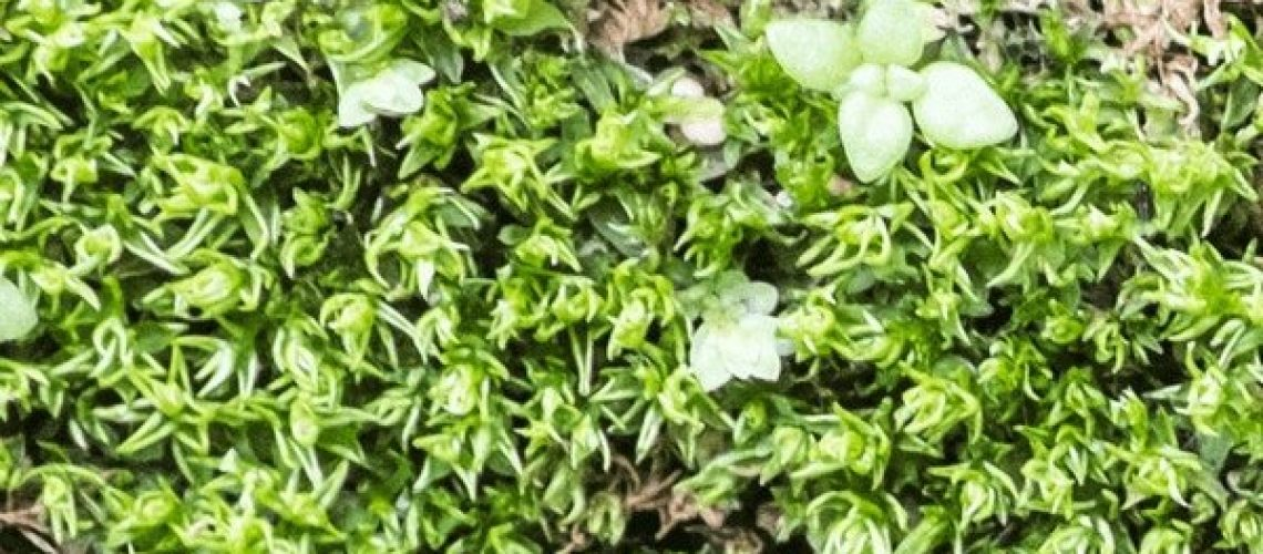 Moss walls - why have them and the benefits